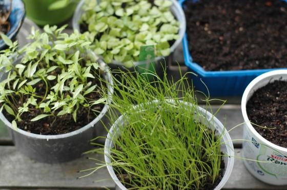 plants organic garden