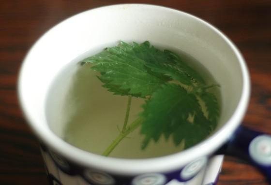 nettle tea herbs