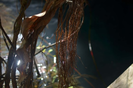 gran cenote3